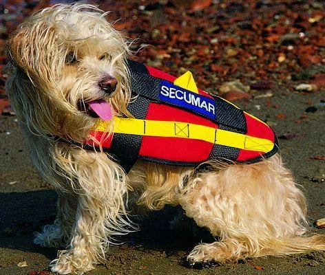 Secumar Hundeschwimmweste, Gr. S - klein